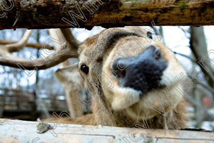 romania-9035 